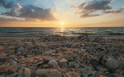 Everything You Need To Know About Shelling On Sanibel