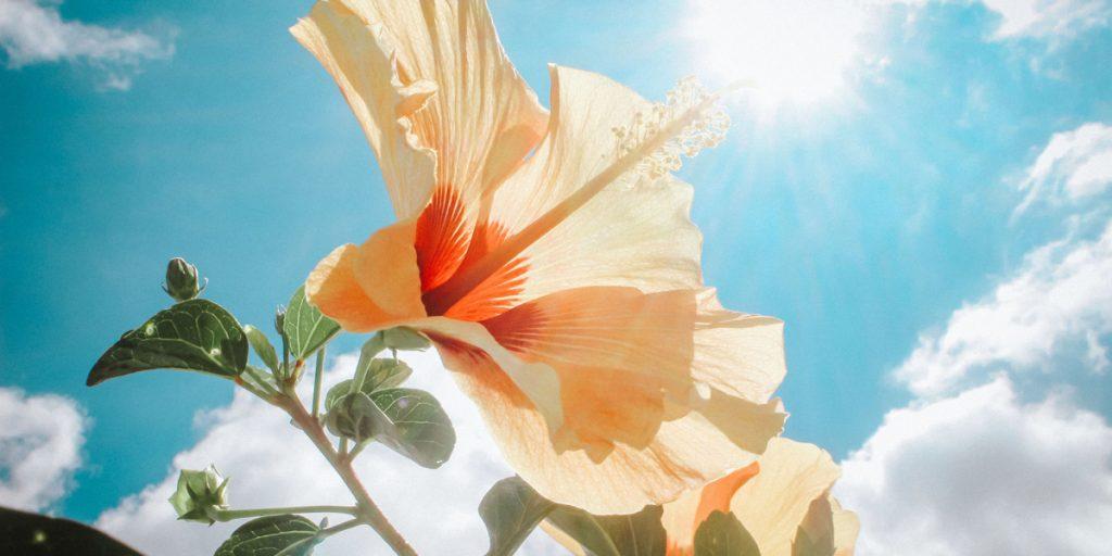 Sanibel Sunshine
