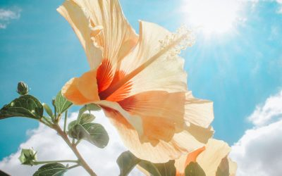 The Perfect Summer Day on Sanibel Island